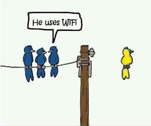 funny, birds, and wifi image