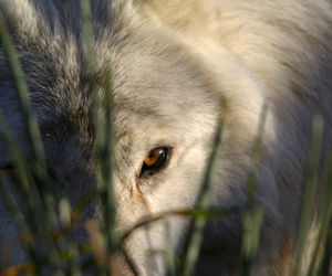 animal, nature, and pagan image