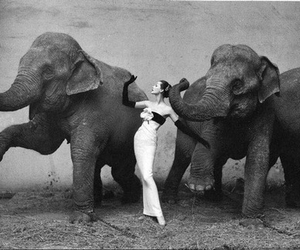 30s, elegant, and elephants image