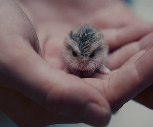 awn, baby, and hamster image