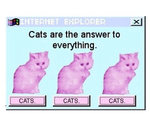 answers, cats, and cute image