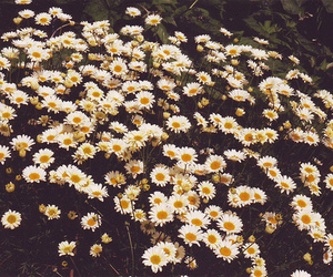 adorable, daisies, and disposable image