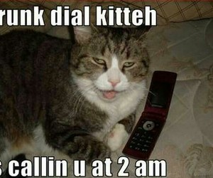drunk and kitteh image