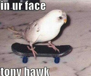 bird, funny, and skateboarding image
