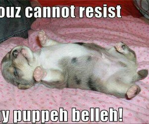 belly, funny, and puppy image
