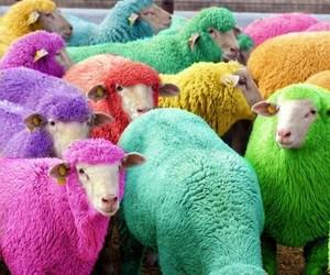 sheep, animal, and colorful image