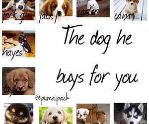 puppies!, so cute, and the dog image