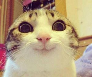 adorable, kitty, and animal image