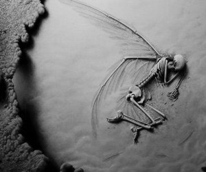 fairy, magical, and wings image