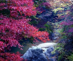 maroon, river, and nature image