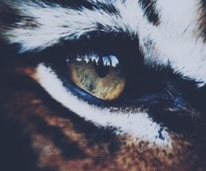 tiger, eye, and animal image
