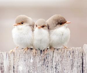bird, cute, and animal image