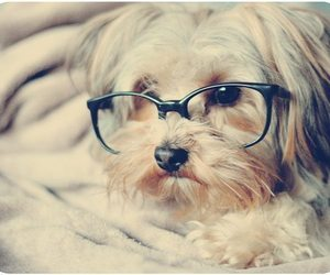 dog, glasses, and cute image
