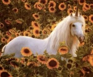 unicorn, flowers, and sunflower image