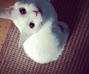 kitten, white cat, and white siamiese image