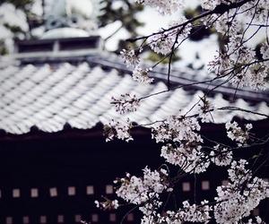 japan, beautiful, and nature image