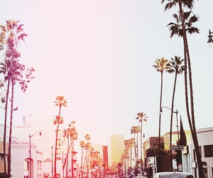 summer, city, and palms image