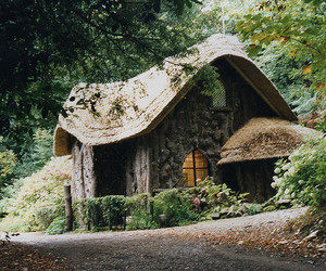 cottage, nature, and forest image