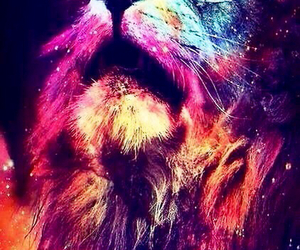 beautiful, colors, and lion image
