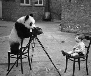 panda, black and white, and photography image