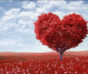 heart, Valentine's Day, and love image