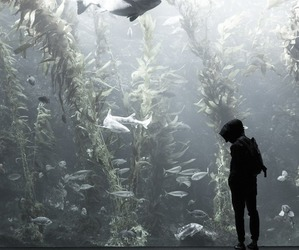 aquarium, fish, and boy image