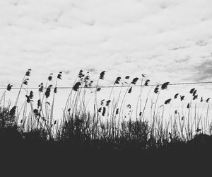 black and white, nature, and flowers image