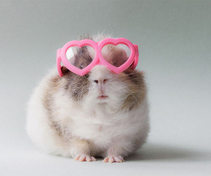 guinea pig, cute, and pink image