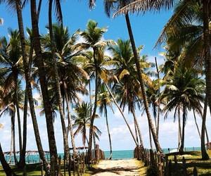 beach, coconut, and fun image