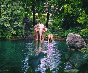elephant, animals, and summer image