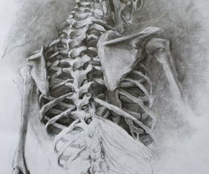 skeleton, art, and bones image