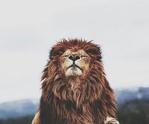 animal, king, and lion image