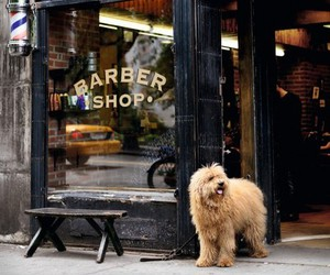 animals, barber, and tan image
