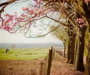 brazil, flower, and landscape image