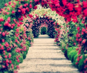 beautiful, wonderful, and flower image