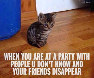 party, cat, and friends image