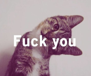 ?, you deserve it, and cat image