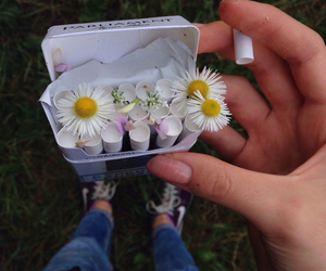 cigarettes, hand, and daisy image