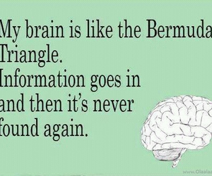funny, quote, and brain image