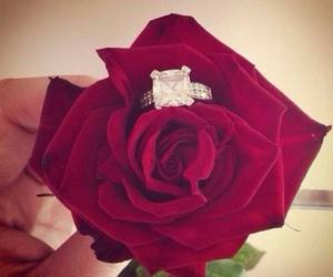 rose, ring, and red image