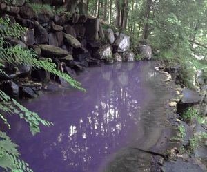 nature, grunge, and purple image