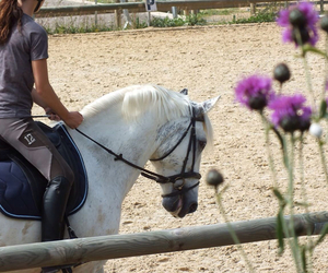 crossed, dressage, and horse image
