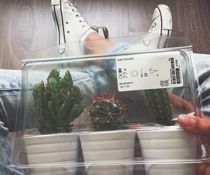hipster and plants image