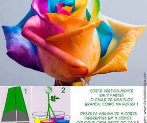 colors, cool, and try image