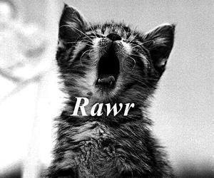 cat, cute, and rawr image