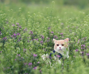 alone, cute, and animals image