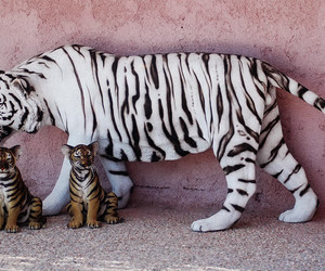 baby and tiger image
