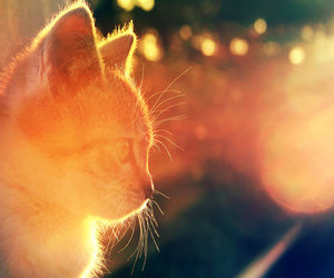 adorable, kitten, and photography image