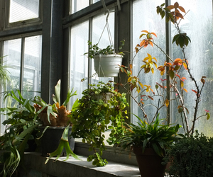 pale, plants, and window image