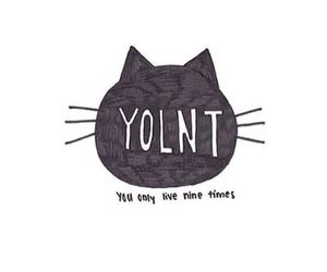 cat and yolnt image